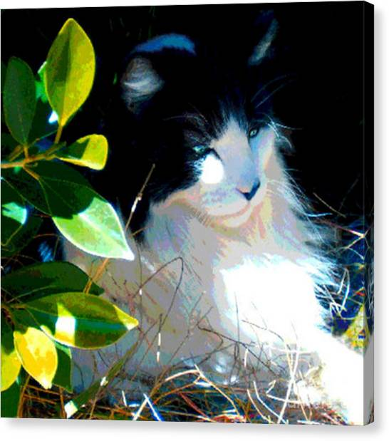 Kitty Hideaway Canvas Print