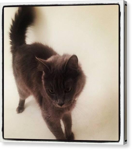 Kiwis Canvas Print - #kiwi #kitty #kitten #cat #meow by Amy Marie La Faille