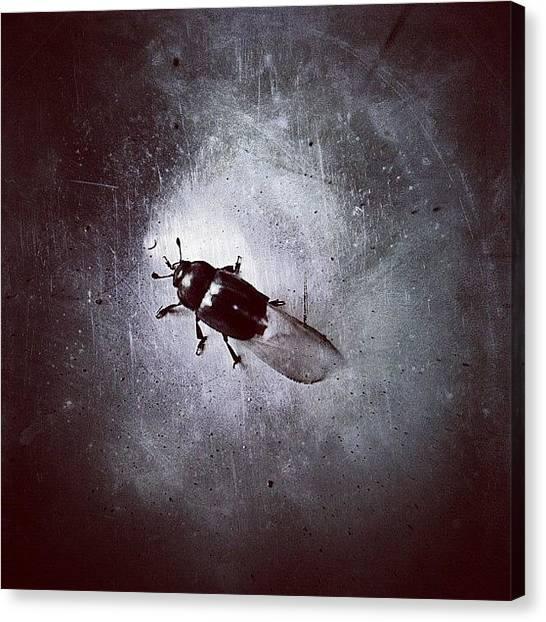 Beetles Canvas Print - Kleiner Käfer - Little Beetle by Cornelia Woerster