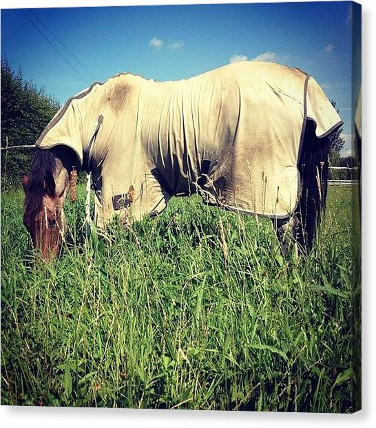 Ponies Canvas Print - Knee High In Lovely New Paddock/field by Caitlin Hay