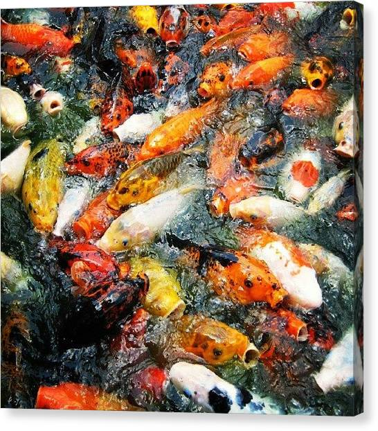 Goldfish Canvas Print - Koi Attack!!! They Are Like Water Pigs by Reid Nelson