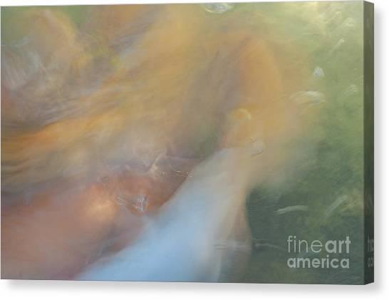 Koi Fish 01 Canvas Print