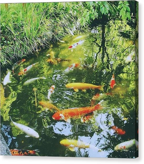 Koi Canvas Print - Koi Fish Pond by Karen Winokan