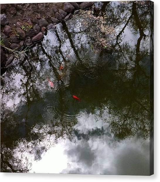 Koi Canvas Print - #koi #pond #reflection by Martin Endara