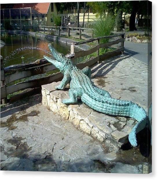 Reptiles Canvas Print - Krokodil Szökőkút @ Xantus János by Tibor Kiraly