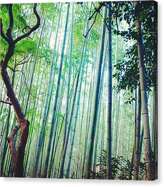 Bamboo Canvas Print - Kyoto 竹林 by Go Takey