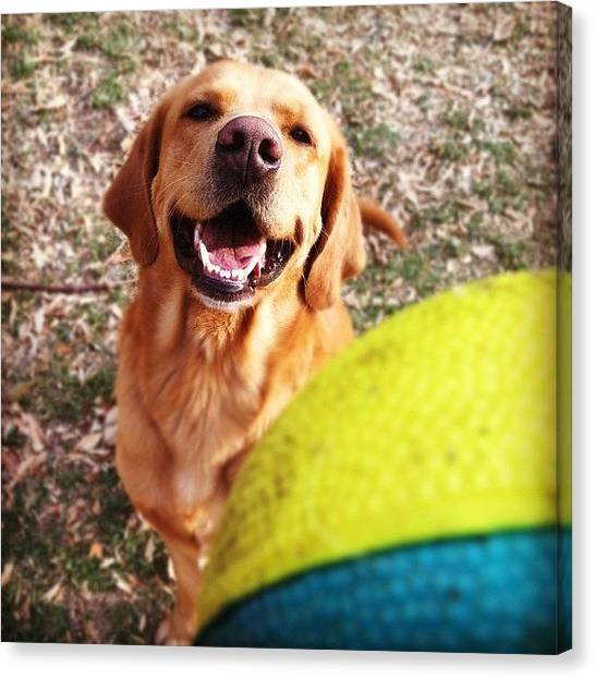 Golden Retrievers Canvas Print - #lab #retriever #golden #iphone4 by Loghan Call