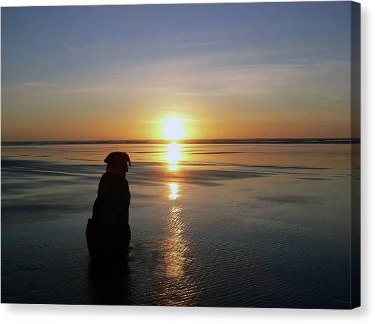 Labrador Watching The Sun Set Canvas Print