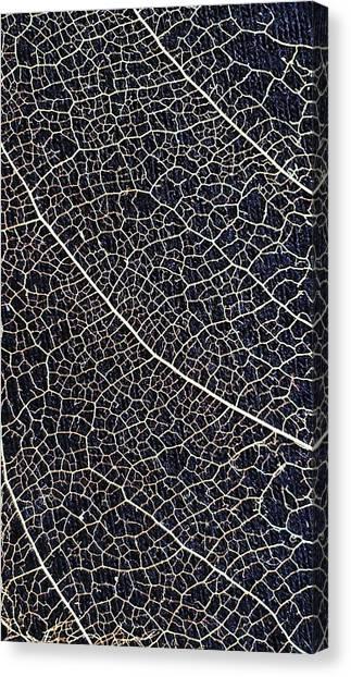 Lace Leaf 5 Canvas Print