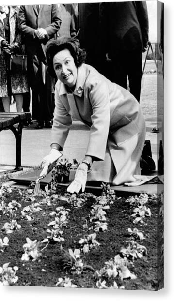 Lady Bird Johnson Planting Pansies Canvas Print by Everett