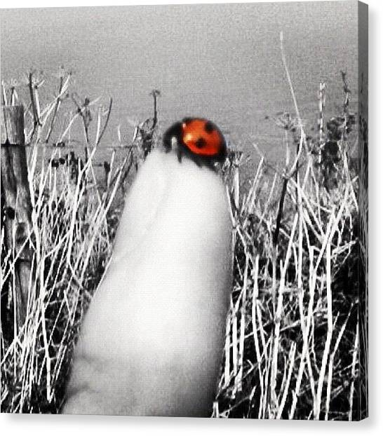 Ladybugs Canvas Print - Ladybird On My Finger by Paul Taylor