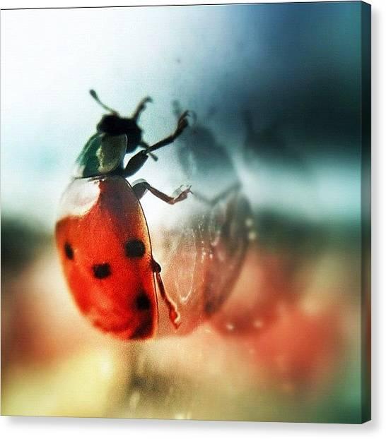 Ladybugs Canvas Print - Ladybug 😊 by Melanie Stork