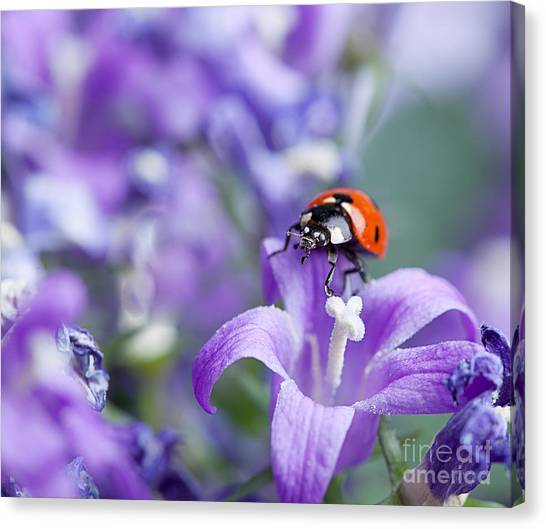 Purple Canvas Print - Ladybug And Bellflowers by Nailia Schwarz