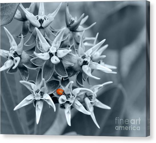 Ladybug Flower Canvas Print