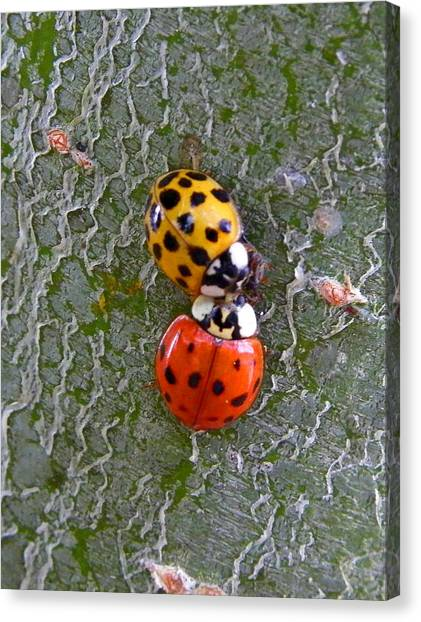 Ladybug Love Canvas Print by Judy Wanamaker