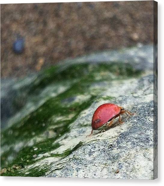 Ladybugs Canvas Print - #ladybug On A Mossy Rock by Mommy Inkwell