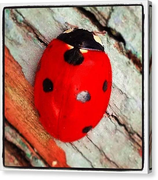 Ladybugs Canvas Print - #ladybug by Stephanie Thomas