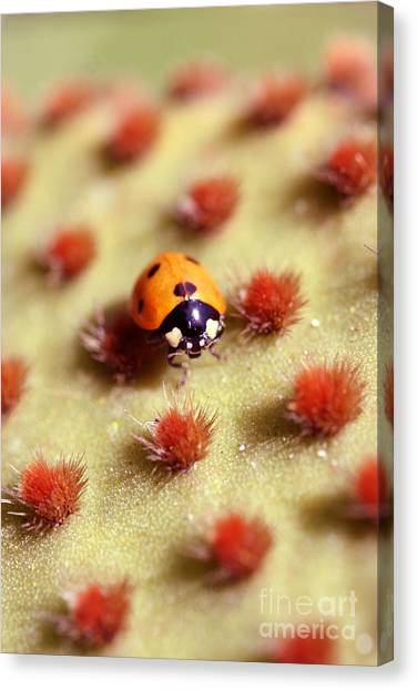 Ladybug2 Canvas Print