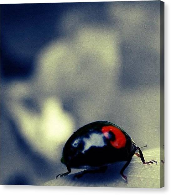 Berries Canvas Print - Ladybugs All Dressed In Red Strolling by Christine Cherry