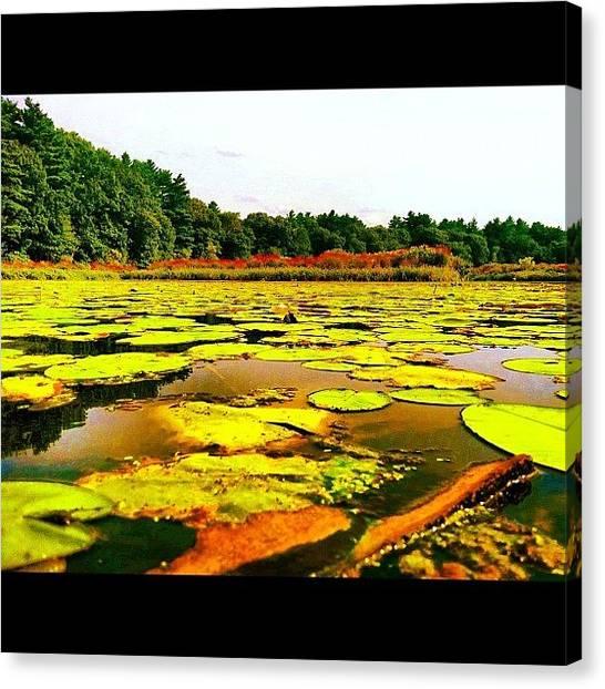Kayaks Canvas Print - #lake #lilypade #swimming #wildlife by Nate Greenberg