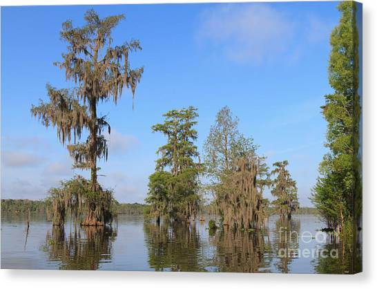 Atchafalaya Basin Canvas Print - Lake Martin by Louise Heusinkveld