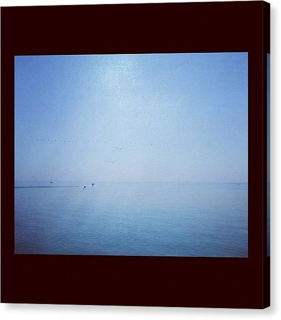 Geese Canvas Print - Lake Ontario by Alex Coleman
