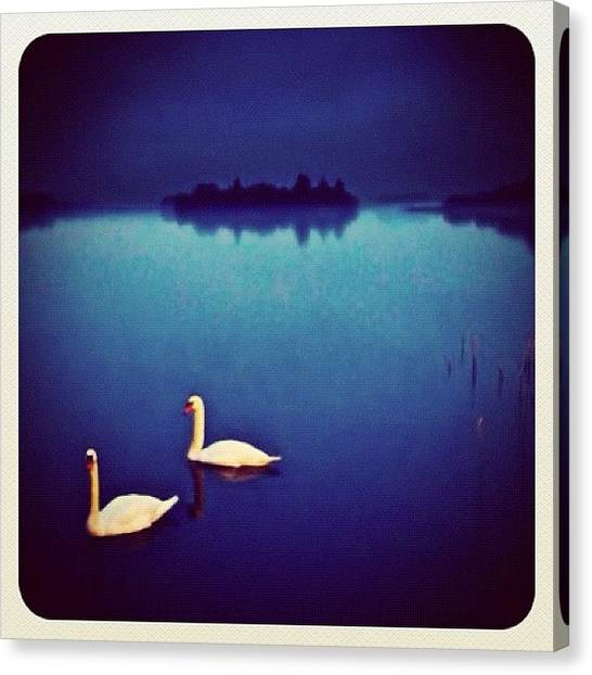Swans Canvas Print - #lake #swan #sky #hill #hdr #iphone by Toonster The Bold