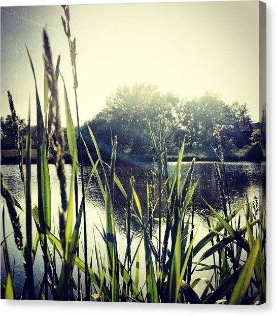 Ponds Canvas Print - #lake #water #pond #skyline #sky #grass by Bryan P
