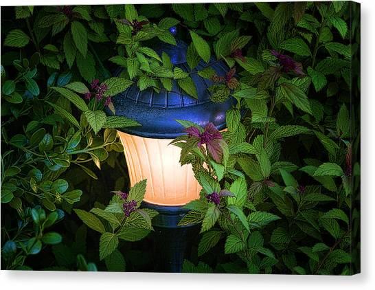 Lush Canvas Print - Landscape Lighting by Tom Mc Nemar