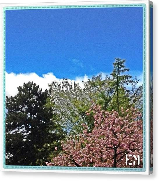 Swiss Canvas Print - #landscape #magnolia_tree #love by Mr Etso