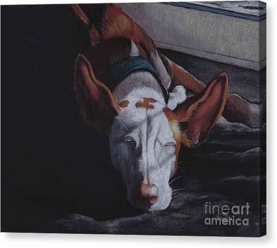 Late Afternoon Nap Canvas Print by Charlotte Yealey
