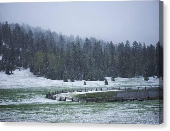 Late Season Snowstorm Canvas Print by C Thomas Willard