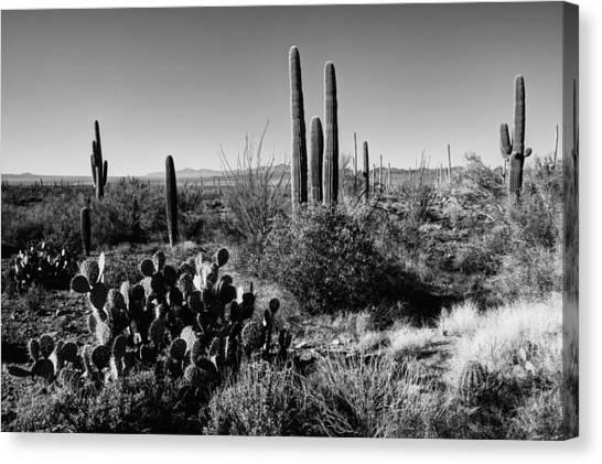 Desert Sunrises Canvas Print - Late Winter Desert by Chad Dutson