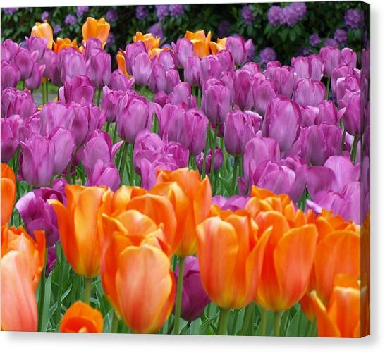 Lavender And Orange Tulips Canvas Print by Larry Krussel