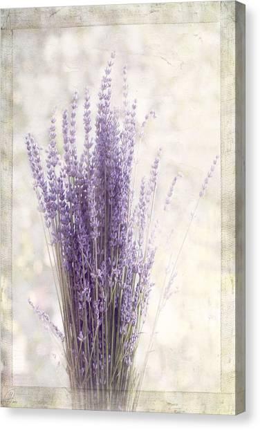 Lavender Bunch Canvas Print