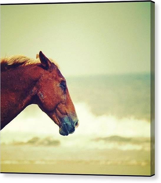 Ocean Animals Canvas Print - Lazy by Beach Bum Chix