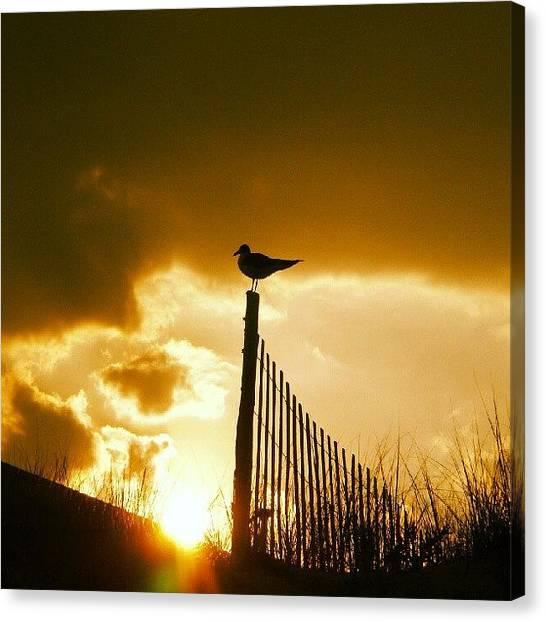 Seagulls Canvas Print - Lbi Last Year by Brian Harris