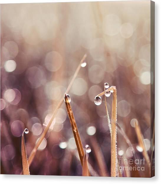 Rain Canvas Print - Le Reveil - S04d2 by Variance Collections