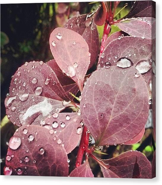 Marijuana Canvas Print - #leaf #leaves #plants #nature #wildlife by Jake Delmonte