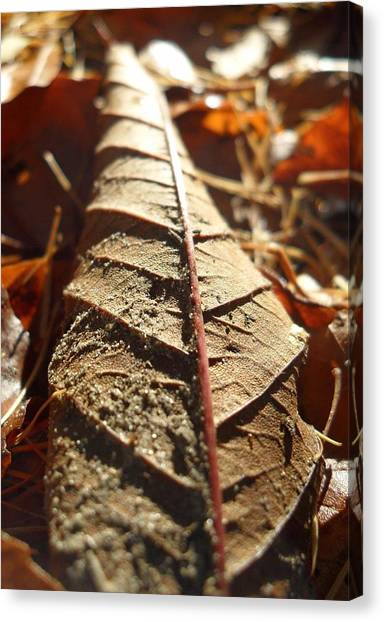Leaf Litter Canvas Print