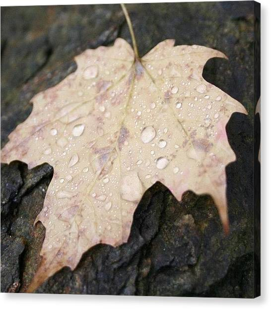 Vermont Canvas Print - #leaf #nofilter #water #drops #rock by Emily Sheridan