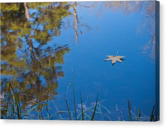 Leaf On Pond Canvas Print