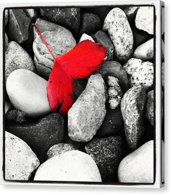 Red Rock Canvas Print - #leaf #rocks #black #white #red by Jenni Munoz