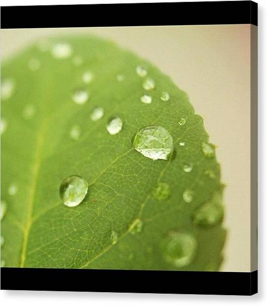 Wet Canvas Print - #leaf #water #wet #pretty #beautiful by Jamiee Spenncer