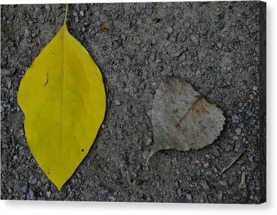 Leaf Yellow And Grey Canvas Print