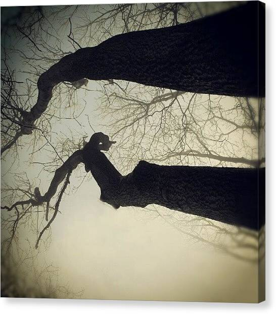 Foggy Forests Canvas Print - #leafless #trees ... #lookingup #zenith by Alexandra Cook