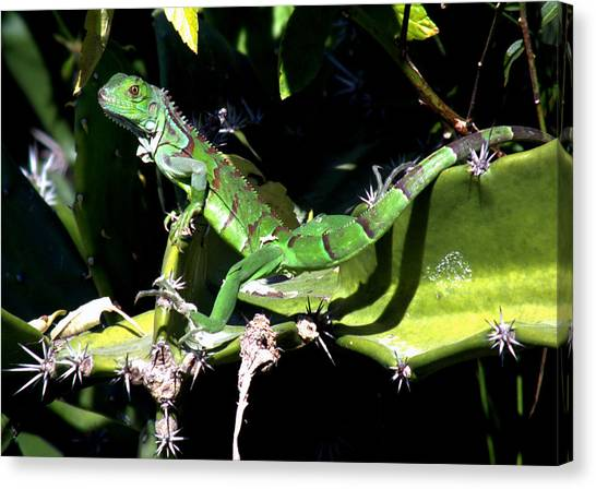 The Nature Center Canvas Print - Leapin Lizards by Karen Wiles