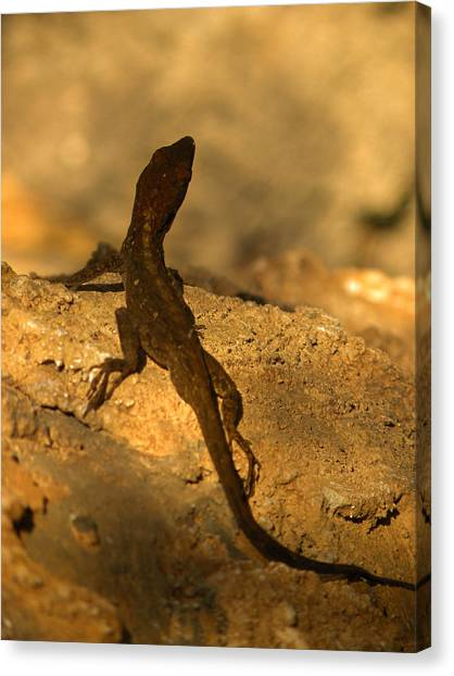 Newts Canvas Print - Leapin' Lizards by Trish Tritz