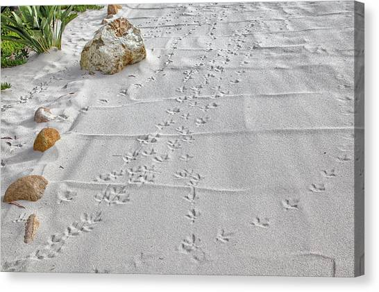 Leave Nothing But Your Footprints Canvas Print