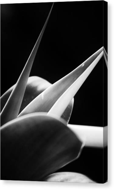 Leaves - Mono Canvas Print by Dickon Thompson